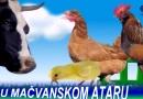 U MAČVANSKOM ATARU-Radio Nešvil 12.03.2017.