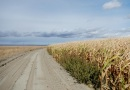 Tropske temperature prave velike probleme poljoprivrednicima