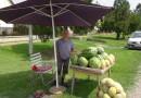 50 godina prodaje lubenice-Plodovi Mačve 23.07.2018.