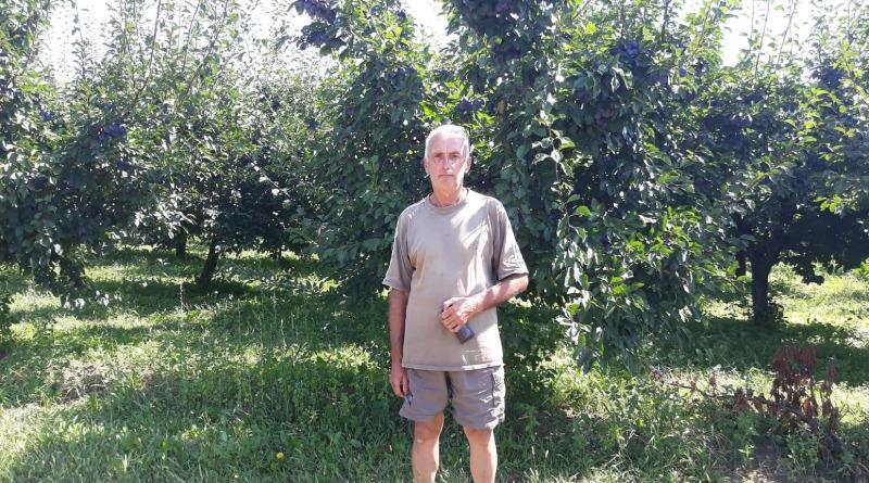 Milivoj Mijatović-Lola ima preko hiljadu stabala šljive-Plodovi Mačve 13.08.2018.